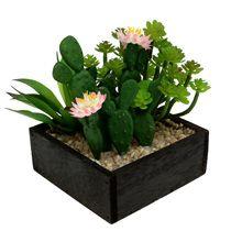 Kaktus & suckulenter