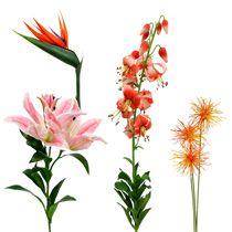 Exotiska blommor
