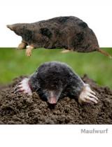 Mole, snail & co.