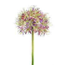 Allium ljusviolett L76cm