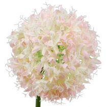 Allium kräm-rosa Ø15cm L70cm