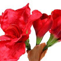 Amaryllis mörkröd 72,5 cm
