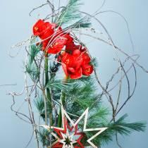 Amaryllis röd 75cm