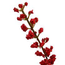 Astilbe bush röd 52cm