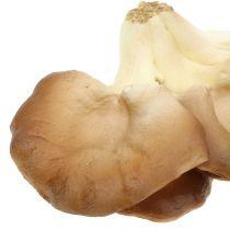 Ostronsvampdekoration svampbrun 12cm x 19 cm