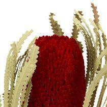 Banksia Hookerana röd 7st