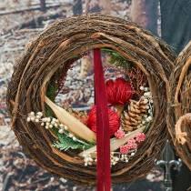 Banksia Baxterii röd 8st