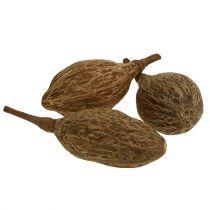 Baobab frukt skalade 15 cm - 20 cm naturliga 5st