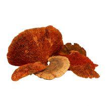 Trädsvamp orange 1kg