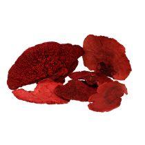 Trädsvamp röd 1kg