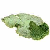 Trädsvamp grön vit tvättad 1 kg