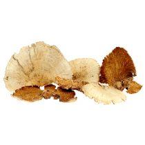 Trädsvamp blekt 1 kg