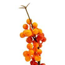 Bärgren orange L 30cm 12st