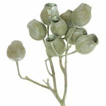 Bellgum gren 5cm - 7cm grön frostat 20st