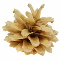 Bergkotte Pinus mugo kräm 2-5cm 1 kg