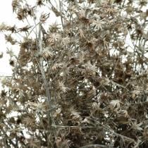Torr blomsterblomma gren vit tvättad 60cm 100g