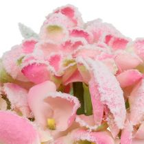 Hortensia rosa snöade 33 cm 4st