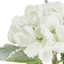 Hortensia vit snöade 33 cm 4st