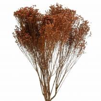 Torkade blommor Broom Bloom Brown 170g