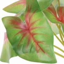 Konstgjord Kaladie sexbladig grön / rosa