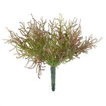 Calocephalus rosa / grön 21,5 cm