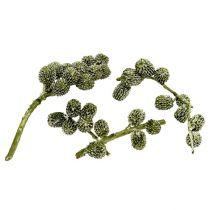 Casurina kottar grön, vaxad 110g
