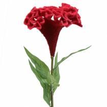 Celosia cristata kukskum röd 72cm