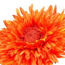 Chrysanthemum nalle 63 cm orange