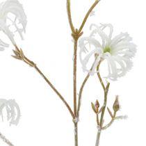 Clematis gren vit flockad 62 cm 3st