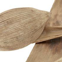 Kokosnötskal blekt 25st