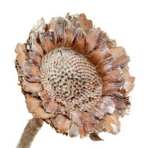 Coronata rosett 25st. Tvättad vit