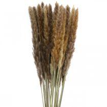 Torrt gräs pampas gräs naturligt gäng 80cm