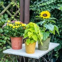 Dekorativa hink frukt gula, orange, grön tvättade Ø15cm H14cm uppsättning av 3