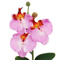 Dekorativ orkidé i en rosa kruka H29cm