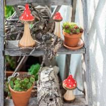Dekorativa paddestolar i träröd, naturlig 13,5 cm - 19 cm 3st