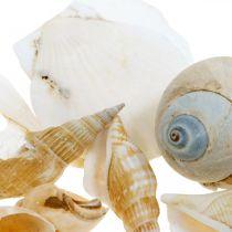 Dekorativa snigelskal Havssniglar natur Maritim dekor 350g