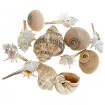 Dekorativa skal och snäckskal tömmer vit, naturlig dekoration maritim 350g
