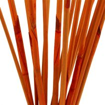 Dekorativa pinnar Elephant Reed Orange 20st