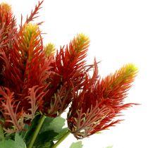 Tistel rödgrön 20 cm 12st