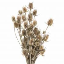 Torkade blommor tistel vit tvättade 60cm 100g