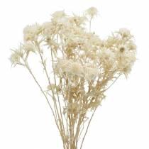 Torkad kvist för torkad blomma Blekt 80g