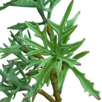 Echeveria 33cm ljusgrön