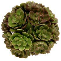 Echeveria boll 5cm grön 4st
