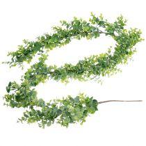 Eucalyptus kransgrön 150cm