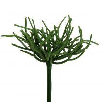 Euphorbia Pick Green 19cm 4st