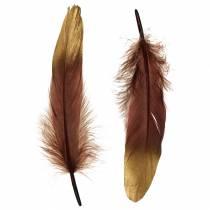 Fjädrar vinrött, guld 18-23cm 24st