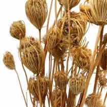 Torkade blommor fänkål naturliga 100g