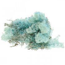 Dekorativ mossa ljusblå akvamarin ren mossa hantverksmossa 400g