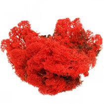Dekorativ moss röd renmossa för hantverk 400g