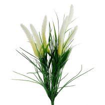 Rostvalsgräsgrön, vit 63cm